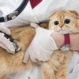 猫のくしゃみ・咳・鼻水の原因と普段から心がけたい対処法について