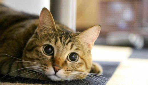 猫ちゃんの吐き戻しを減らしてあげるには?原因と対策をあわせて紹介