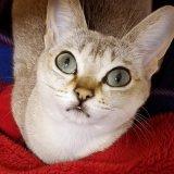 キャットフード好きな猫