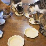 猫に「食べさせると危険なもの」を知っておこう