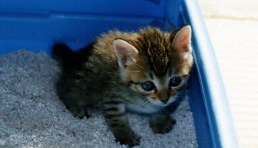 猫の便秘の原因とは?便秘対策として自宅でもできる方法を紹介