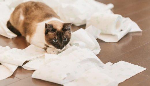 猫にとって大事な「トイレ」ってどうやって選べばいいの?種類は?