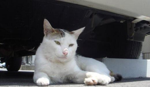 「猫バンバン」って何のこと??猫の安全を守る取り組み