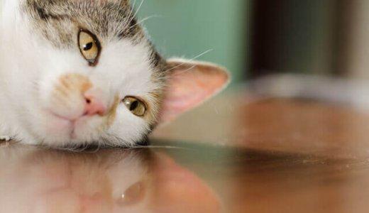猫ちゃんが下痢をしたときの対処方法と原因、緊急性の高い下痢症状もある!?