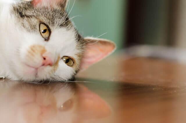 アンニュイ猫