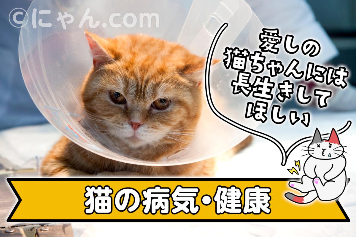 猫の病気・健康