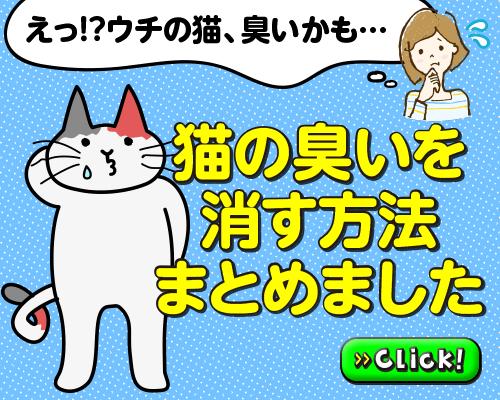 ウチの猫臭いかも…!?猫のにおいを消す方法