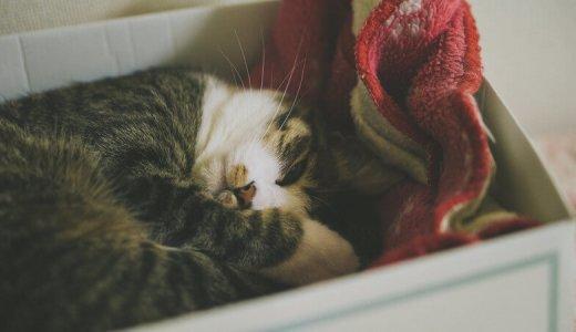 猫がゴロゴロするのはどんな理由があるの?