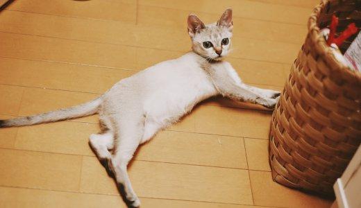 猫が床で「くねくね」する動きにはどんな意味があるの?