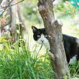 猫には世界がどう見えているの?猫の視力についてのお話