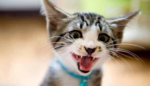 猫のサイレント鳴き(サイレントニャー)にある特別な意味