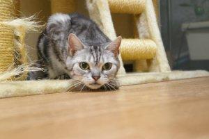 猫の匍匐前進
