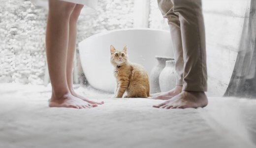 猫の糞の寄生虫が宿主の『起業』をうながす!?トキソプラズマが与える影響が話題