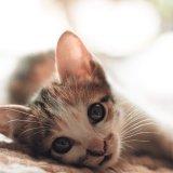 嬉しいからだと思ってた!!猫が喉を鳴らす本当の仕組みが明らかに!?