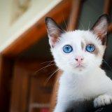 猫にサプリメントは必要?欧米ではメジャーなペット用サプリメント