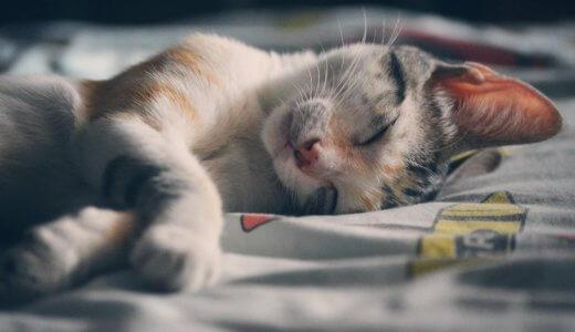 猫と一緒に眠ってもいいの?夜に猫と一緒に寝るメリットとデメリット