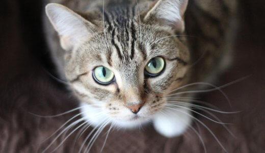 猫が嫌がることしてない??無意識にしてしまう『猫が嫌がること』