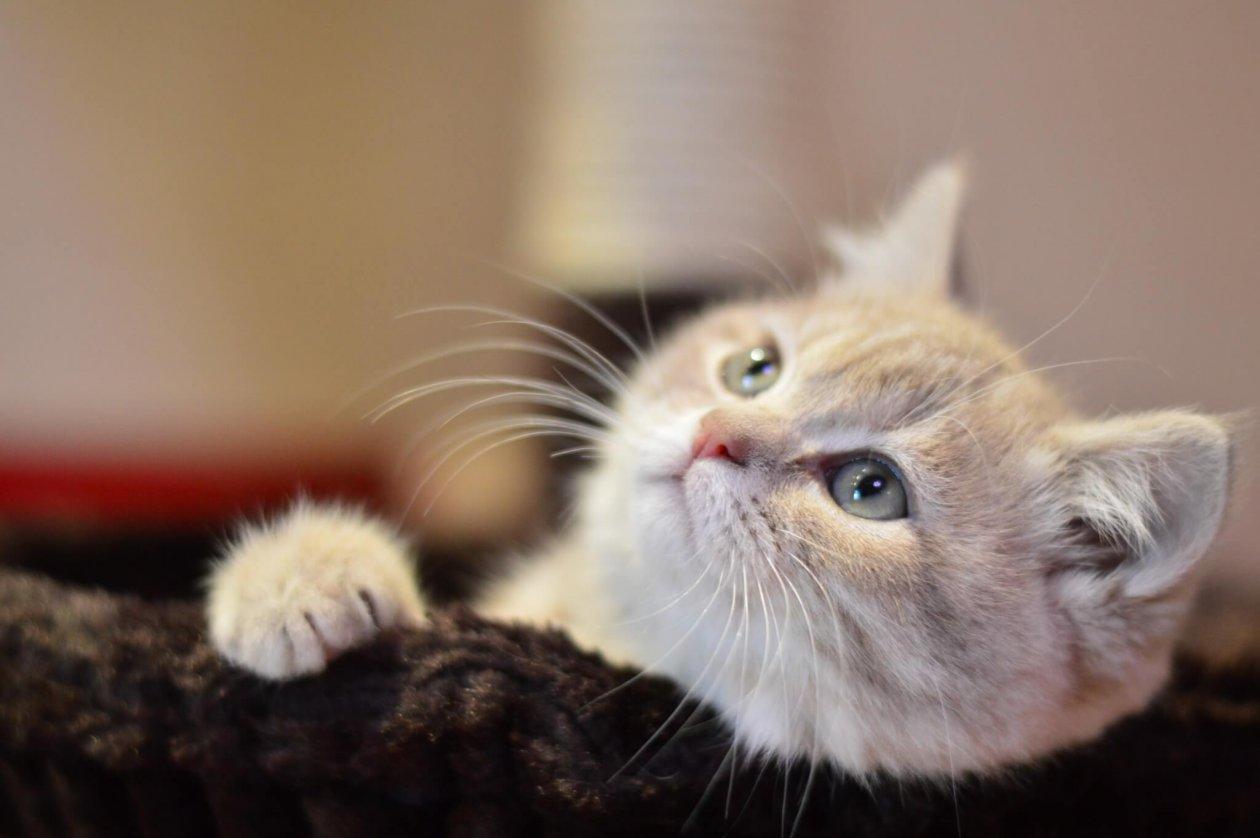 物思いにふける猫