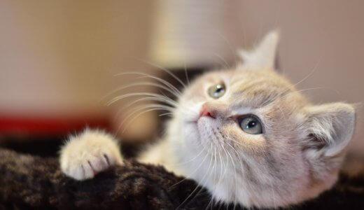 猫の名前はどんなのがいい?猫が認識しやすい音で名前をつけよう