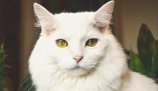 家の中にも危険はいっぱい!猫にとって「危険なもの」を遠ざけておこう