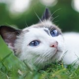 全ての猫を数える取り組みが海外で話題!ワシントン市が行う猫の国勢調査