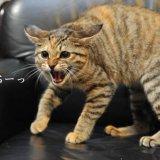 猫に粉末のお薬を飲ませる方法【病院でもらったお薬を飲ませたい!】
