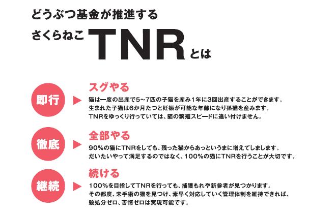 TNR活動とは?