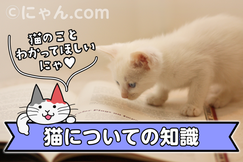 猫についての知識