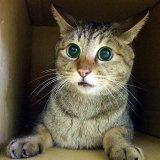 【動画】猫が驚く姿がかわいい♡猫のびっくり動画が癒やされる