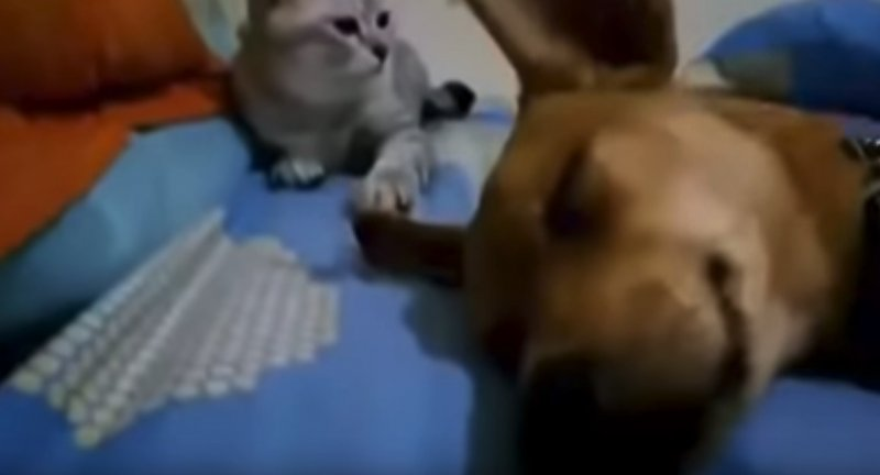 Dog_Sleep_Farting_Makes_Cat_Angry