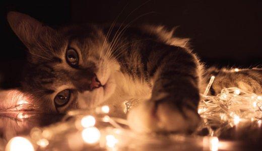 飼っててよかった!猫を飼うことが肉体的、精神的にプラスになる事が科学的に証明される