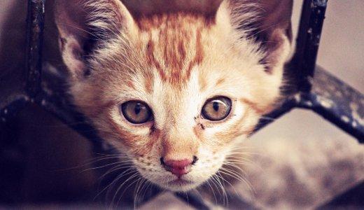 イギリスで生後6ヵ月未満の「子犬と子猫」が販売禁止 に!日本ではどうなるの!?