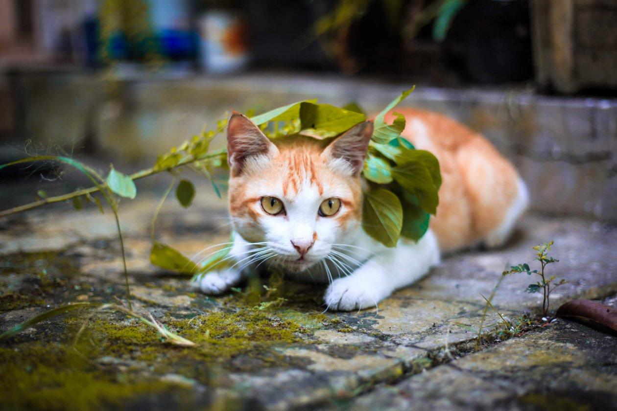 猫ハンティング