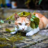 猫が飛びつくときの「おしりフリフリ」は可愛い!どんな意味があるの?
