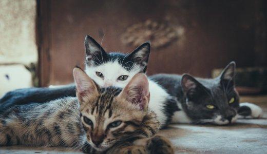 飼い猫がいると「猫カフェ」に行ったらだめなの?浮気ダメ?病気が心配?