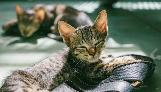 猫にペット保険は必要?不要?猫ちゃんの保険について考えてみた