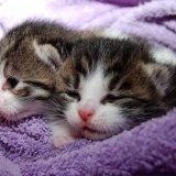 猫はいつまで子猫なの?子猫の時期と猫の寿命について