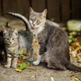 猫がしっぽを上げる意味はなに?さらにしっぽをパタパタしている場合は…