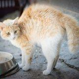 猫のしっぽがボワっと膨らむ理由はなに?怒ってる?それとも怖いの?