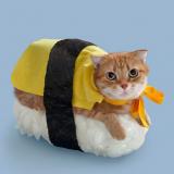 猫のハロウィンコスプレの参考に!海外のハロウィンコス42選