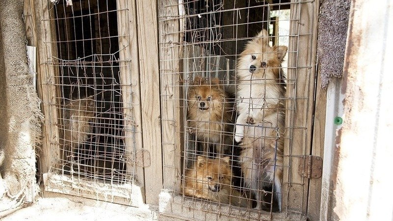 Should puppy mills be banned in the United States?