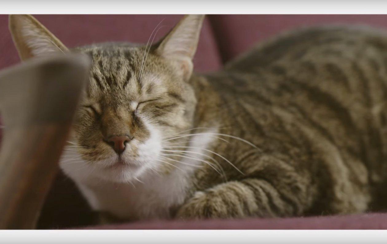 話題の『ネコ家具』がカワイすぎてやばい!職人技を感じる一生モノの猫用家具___猫の飼い方おしえます___にゃんこむ