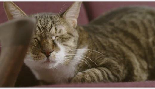話題の『ネコ家具』がカワイすぎてやばい!職人技を感じる一生モノの猫用家具