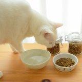 猫が感じることのできる味覚は「苦み」と「酸味」しかないってホント?