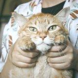 「保護猫を家族に迎えたい!」保護猫の引き取り条件や注意点をくわしく解説します